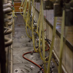 Shaw Renewables Biomass Biogas renewable energy dairy farm milking parlour